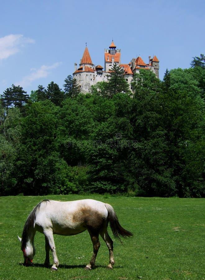 άλογο πίτουρου στοκ εικόνα