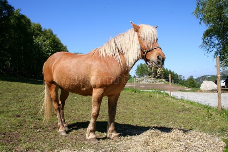 άλογο πεδίων στοκ εικόνες