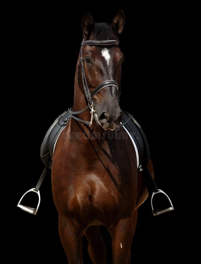 Download άλογο που απομονώνεται &m στοκ εικόνα. εικόνα από dressage - 2230885