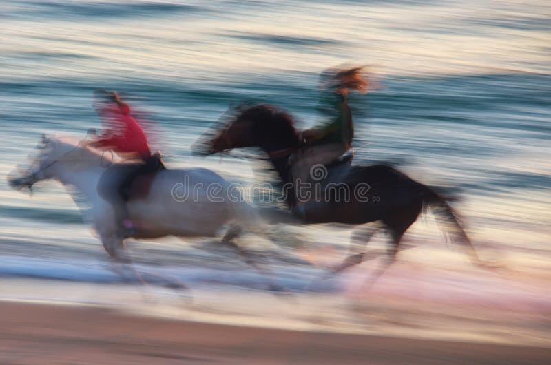 Άλογο που κινείται στη θάλασσα στοκ φωτογραφία με δικαίωμα ελεύθερης χρήσης