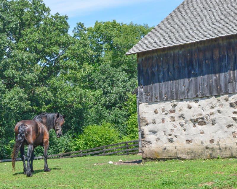 Άλογο που κοιτάζει πίσω με μια πέτρινη και ξύλινη σιταποθήκη στοκ εικόνες