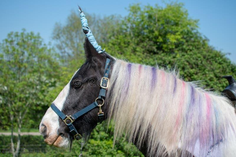 Άλογο που ντύνεται επάνω ως μονόκερος στοκ φωτογραφία με δικαίωμα ελεύθερης χρήσης