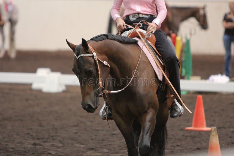 Άλογο που οδηγιέται στοκ εικόνα με δικαίωμα ελεύθερης χρήσης