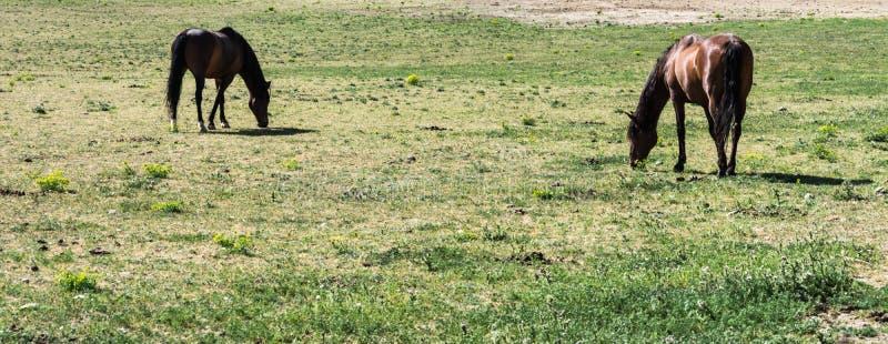 Άλογο που σε ένα πανόραμα λιβαδιών στοκ εικόνα με δικαίωμα ελεύθερης χρήσης