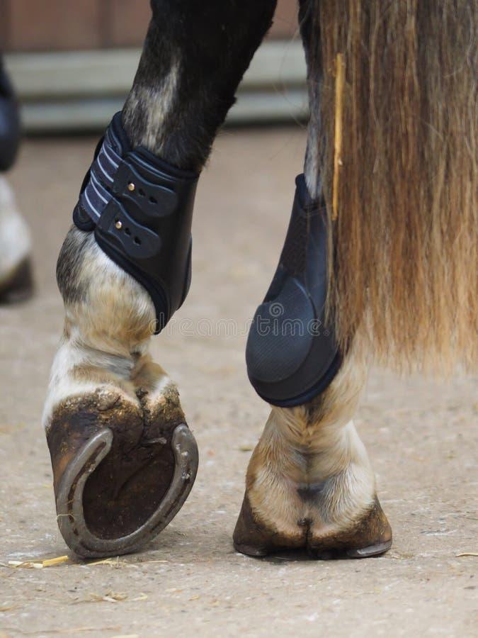 Άλογο που στηρίζεται ένα πόδι στοκ εικόνες με δικαίωμα ελεύθερης χρήσης