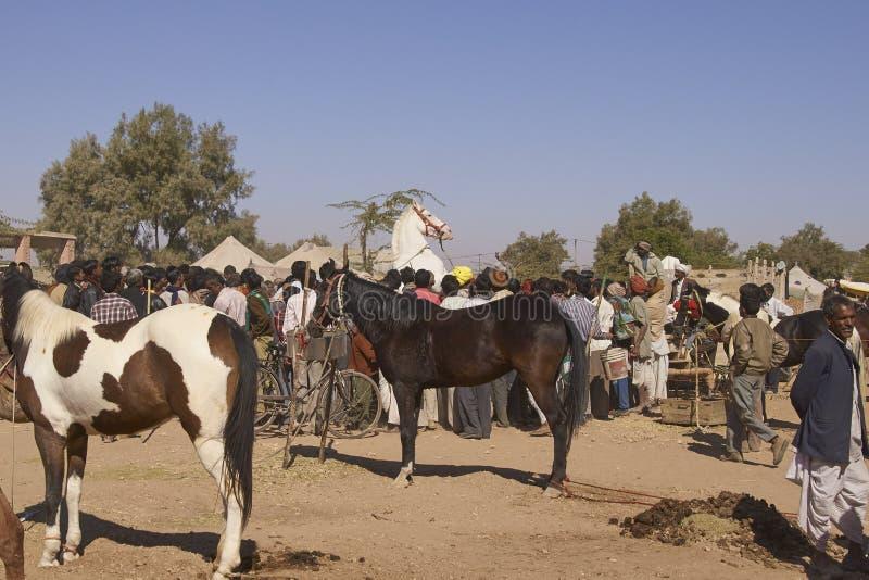 Άλογο προσοχής πλήθους στο φεστιβάλ Nagaur στοκ εικόνες με δικαίωμα ελεύθερης χρήσης