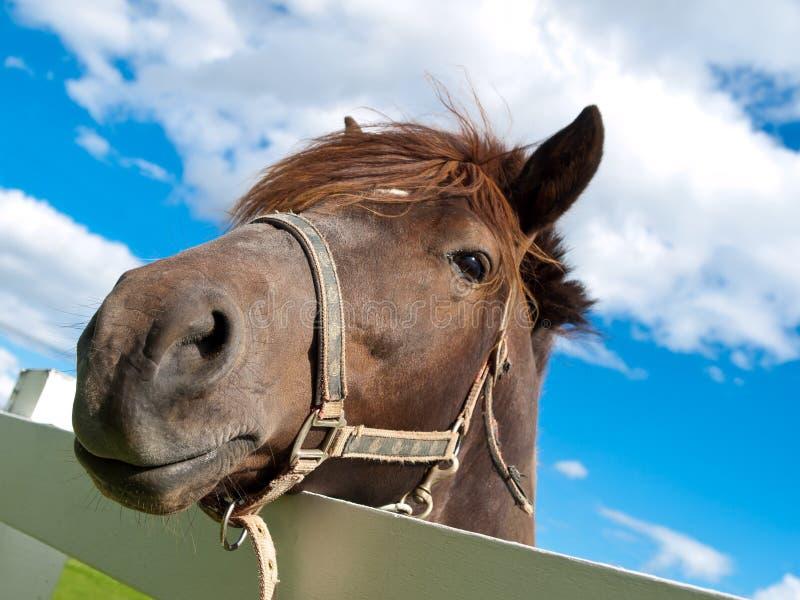 άλογο προσώπου στοκ εικόνα