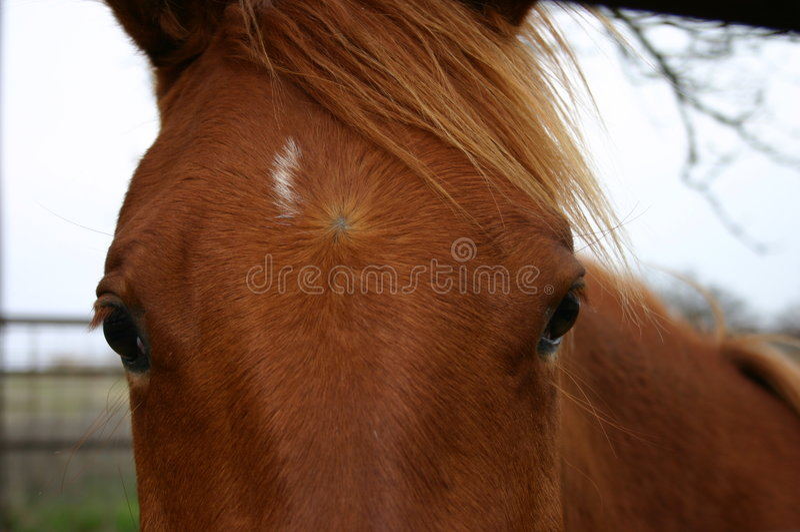 άλογο προσώπου Στοκ εικόνες με δικαίωμα ελεύθερης χρήσης