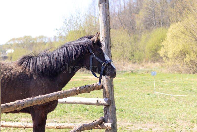 άλογο στην οδό το παιδί ταΐζει το άλογο οι γονείς ελέγχουν τη διαδικασία στοκ εικόνες