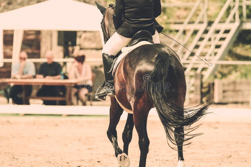 Άλογο στη δοκιμή εκπαίδευσης αλόγου σε περιστροφές στην ενίσχυση τρεξίματος κατά την άποψη από πίσω στοκ εικόνες με δικαίωμα ελεύθερης χρήσης