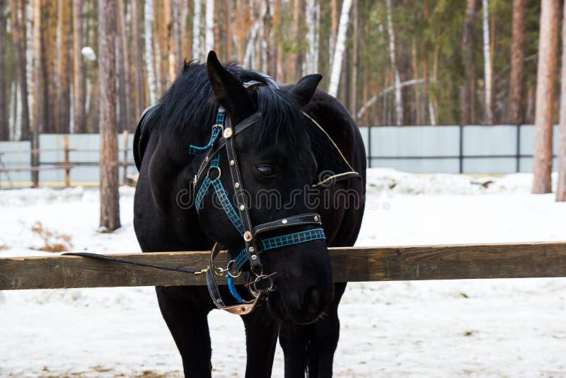 Άλογο στη μάντρα στο αγρόκτημα στοκ εικόνα