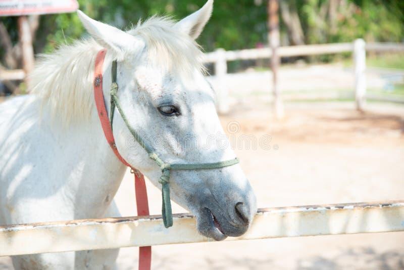 Άλογο στη φύση Πορτρέτο ενός αλόγου, άσπρο άλογο στοκ φωτογραφία με δικαίωμα ελεύθερης χρήσης