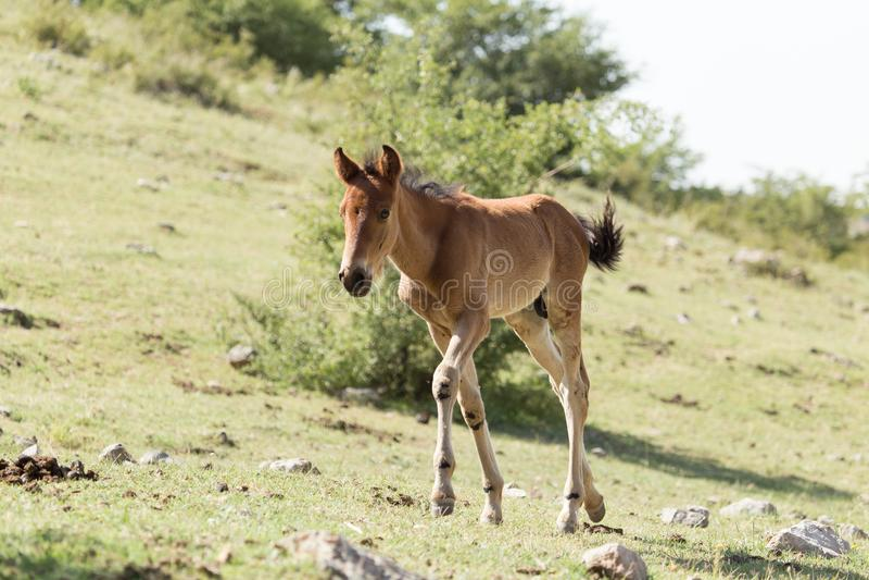 Άλογο στη φύση στοκ εικόνες με δικαίωμα ελεύθερης χρήσης