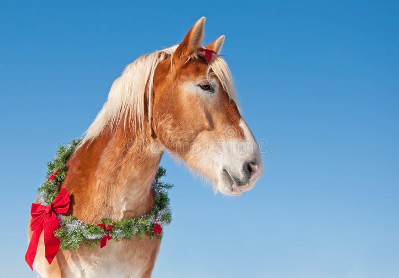 Άλογο σχεδίων που φορά ένα στεφάνι Χριστουγέννων στοκ εικόνες