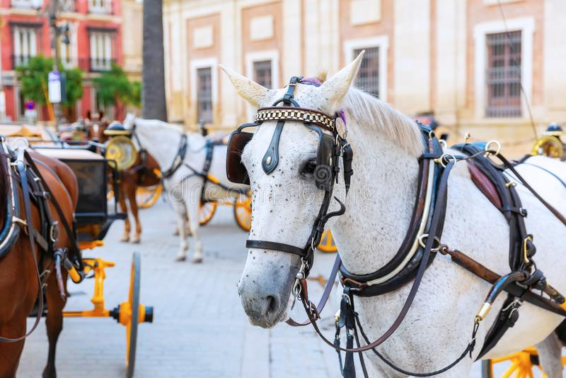 Άλογο σχεδίων των παραδοσιακών μεταφορών αλόγων στη Σεβίλη, Ισπανία στοκ εικόνες