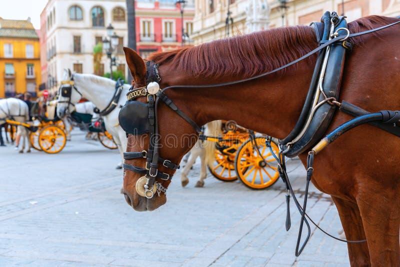 Άλογο σχεδίων των παραδοσιακών μεταφορών αλόγων στη Σεβίλη, Ισπανία στοκ φωτογραφία με δικαίωμα ελεύθερης χρήσης