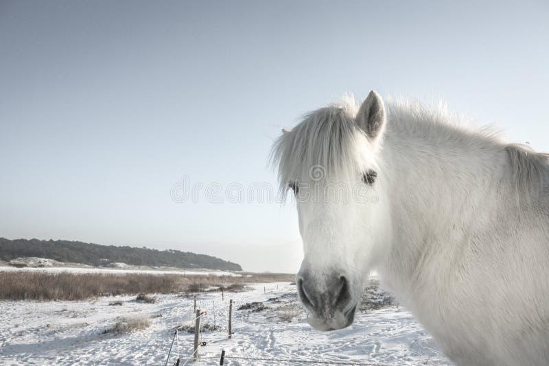 άλογο φωτογραφικών μηχανώ στοκ φωτογραφία με δικαίωμα ελεύθερης χρήσης