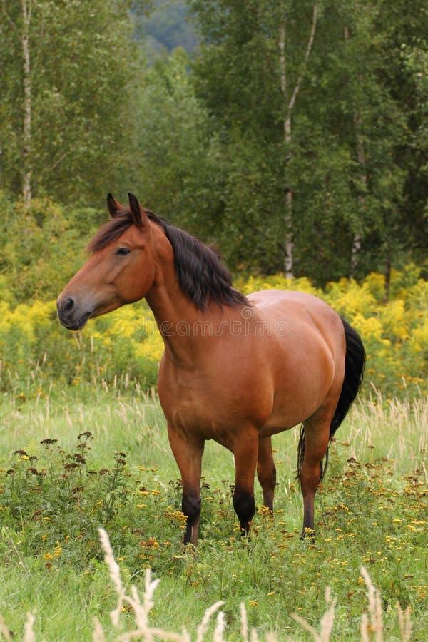 Download άλογο στοκ εικόνες. εικόνα από έδαφος, άλογο, βοσκή, breckenridge - 1534834