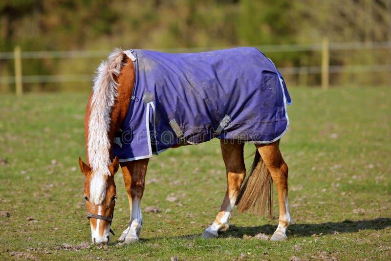 Download άλογο στοκ εικόνα. εικόνα από κυνήγι, αντοχή, φύση, ασφάλεια - 2231947