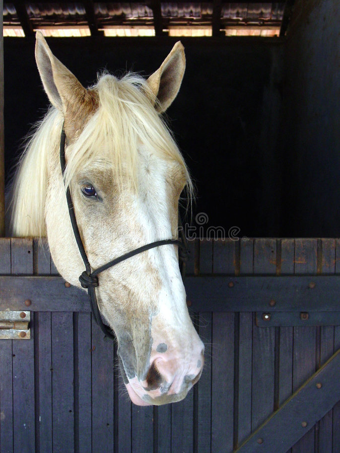 Download άλογο στοκ εικόνες. εικόνα από closeup, κομψός, κεφάλι - 390162