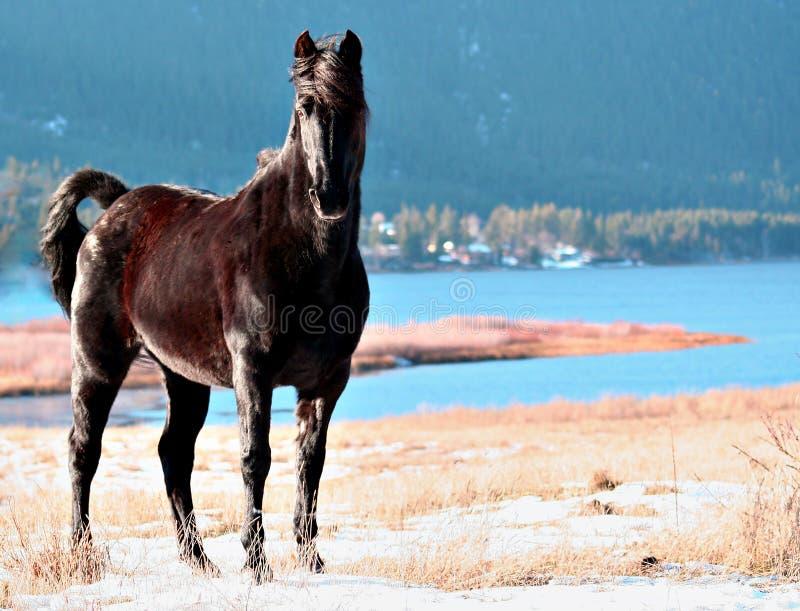 Download άλογο στοκ εικόνες. εικόνα από στήριγμα, άγριος, φοραδίτσα - 398294