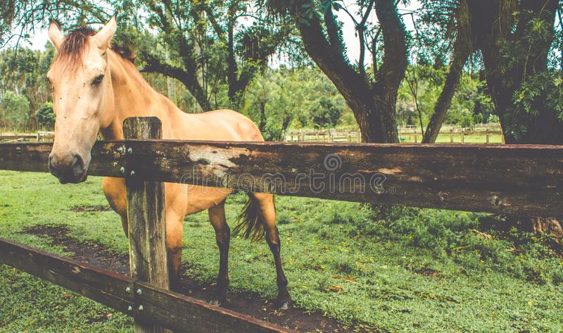 Άλογο ehind ένας ξύλινος φράκτης στοκ φωτογραφίες με δικαίωμα ελεύθερης χρήσης