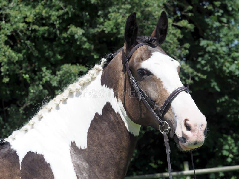 Άλογο Headshot στοκ φωτογραφία με δικαίωμα ελεύθερης χρήσης