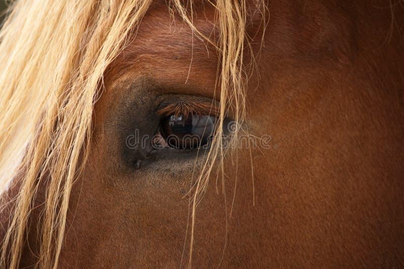 άλογο s ματιών στοκ φωτογραφίες με δικαίωμα ελεύθερης χρήσης