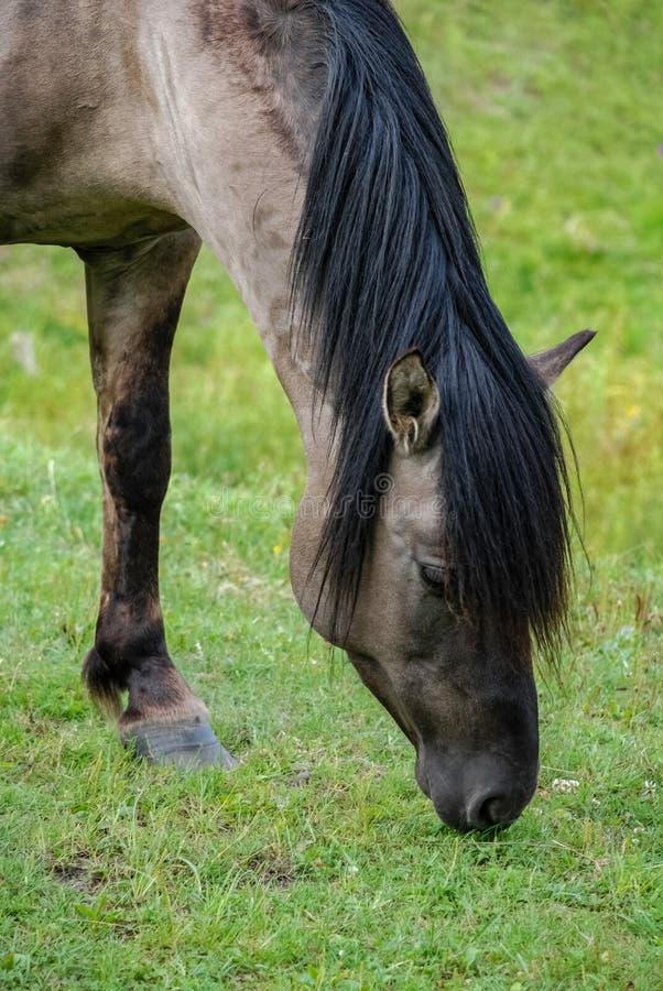 Άλογο, Zwierzyniec, ηχώ Stawy, εθνικό πάρκο Roztocze, Pola στοκ εικόνα με δικαίωμα ελεύθερης χρήσης