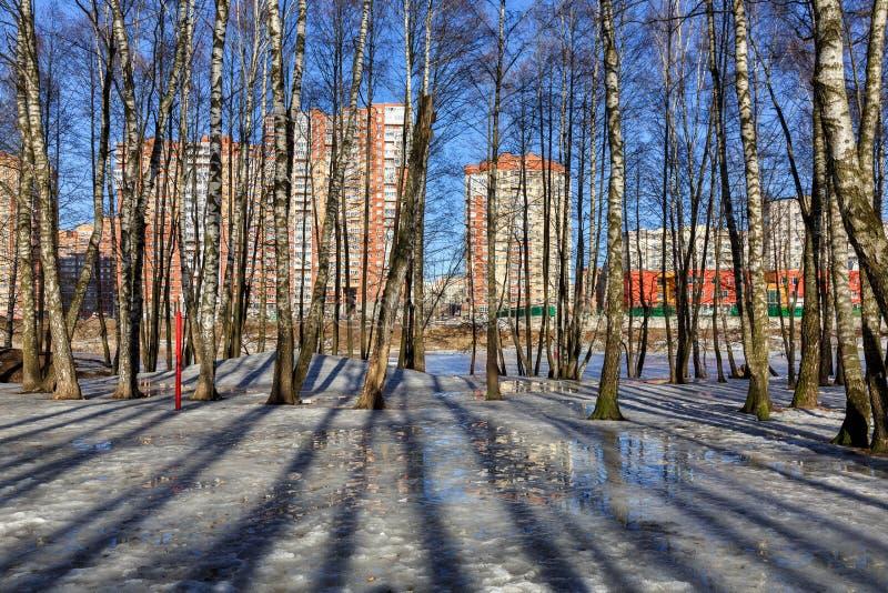 Άλσος σημύδων μπροστά από τη νέα κατοικημένη γειτονιά Balashikha, περιοχή της Μόσχας, της Ρωσίας στοκ εικόνα με δικαίωμα ελεύθερης χρήσης