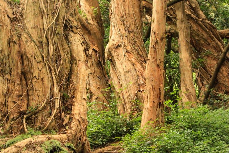 Άλσος των δέντρων στοκ φωτογραφία με δικαίωμα ελεύθερης χρήσης