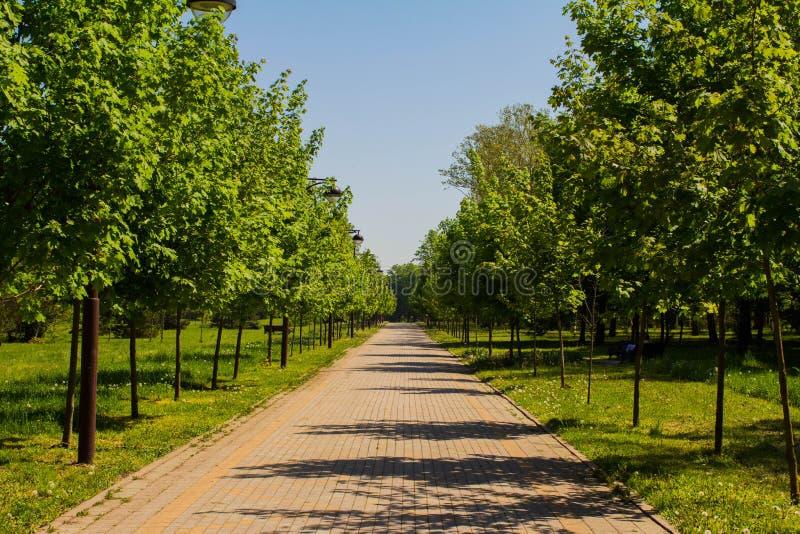 Άμεση γραμμική προοπτική στο πάρκο στοκ εικόνες