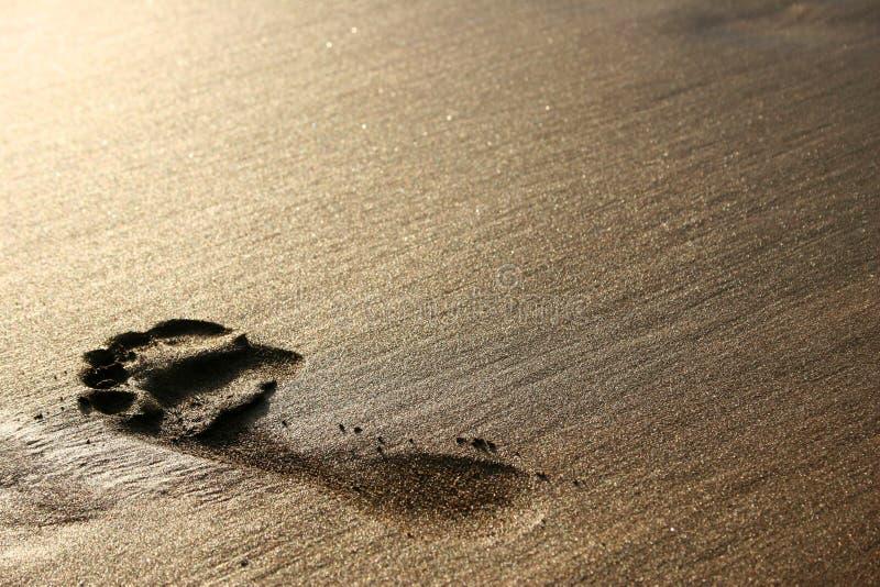 άμμος ίχνους στοκ φωτογραφία