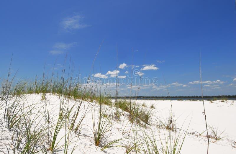 άμμος αμμόλοφων παραλιών στοκ φωτογραφία