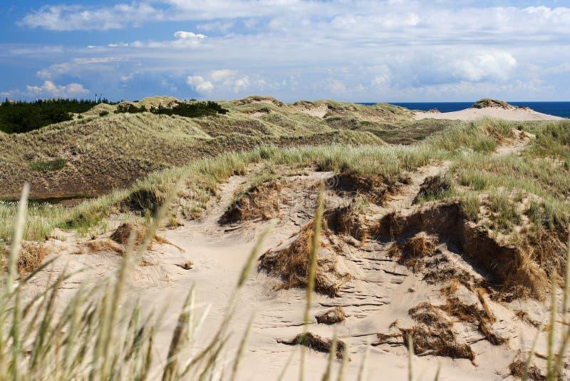 άμμος αμμόλοφων της Δανίας στοκ εικόνα