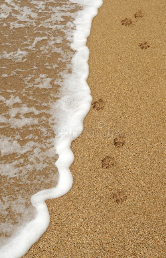 άμμος ποδιών ιχνών σκυλιών στοκ εικόνα