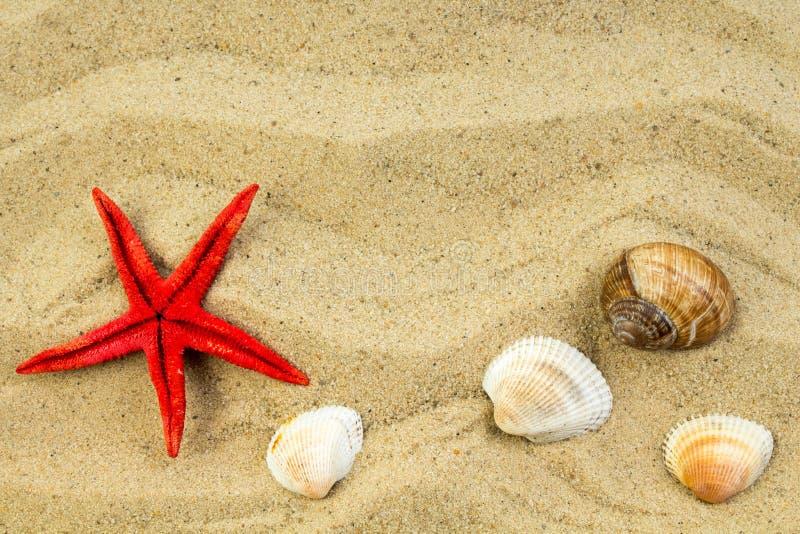 Άμμος στην παραλία, τον αστερία και τα χαλίκια ως υπόβαθρο Έννοια της τοπ άποψης υπολοίπου στοκ εικόνες
