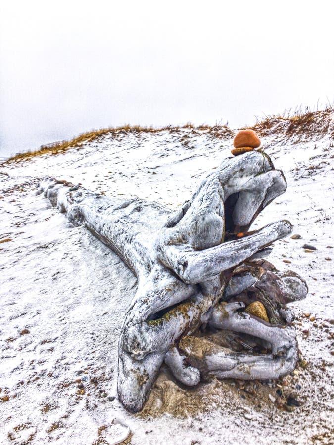 Άμμος & Driftwood χιονιού στοκ εικόνες