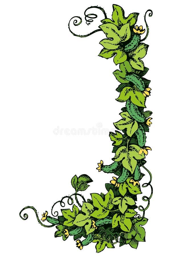Άμπελος αγγουριών ανασκόπηση που σύρει το floral διάνυσμα χλόης ελεύθερη απεικόνιση δικαιώματος