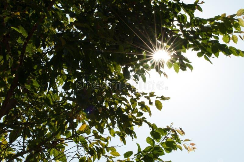 λάμποντας δέντρα ήλιων στοκ φωτογραφίες