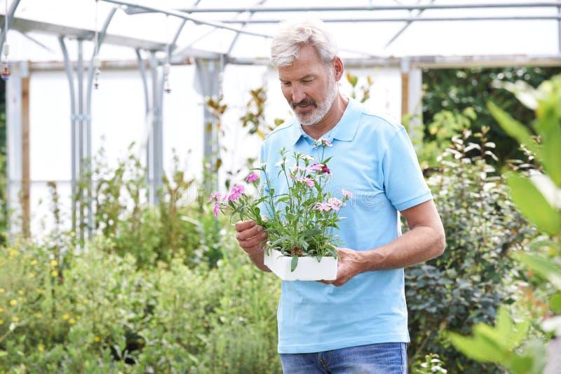 Άνδρας υπάλληλος στις εγκαταστάσεις κεντρικής εκμετάλλευσης κήπων στοκ εικόνες με δικαίωμα ελεύθερης χρήσης