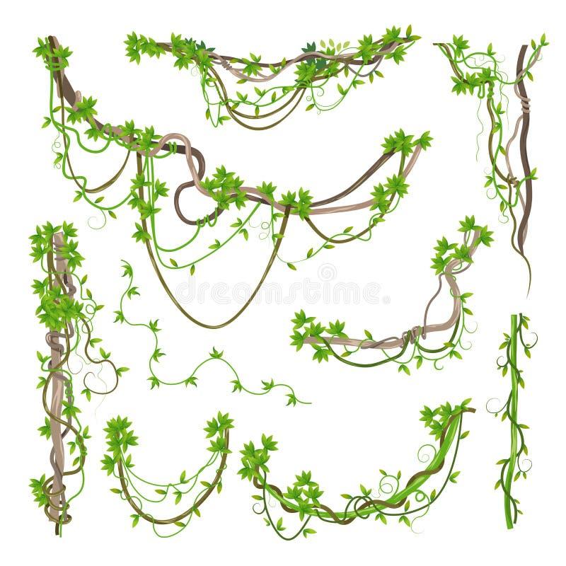 Άνεμος κλάδοι πρασινάδων εγκαταστάσεων της Λιάνα ή ζουγκλών ελεύθερη απεικόνιση δικαιώματος