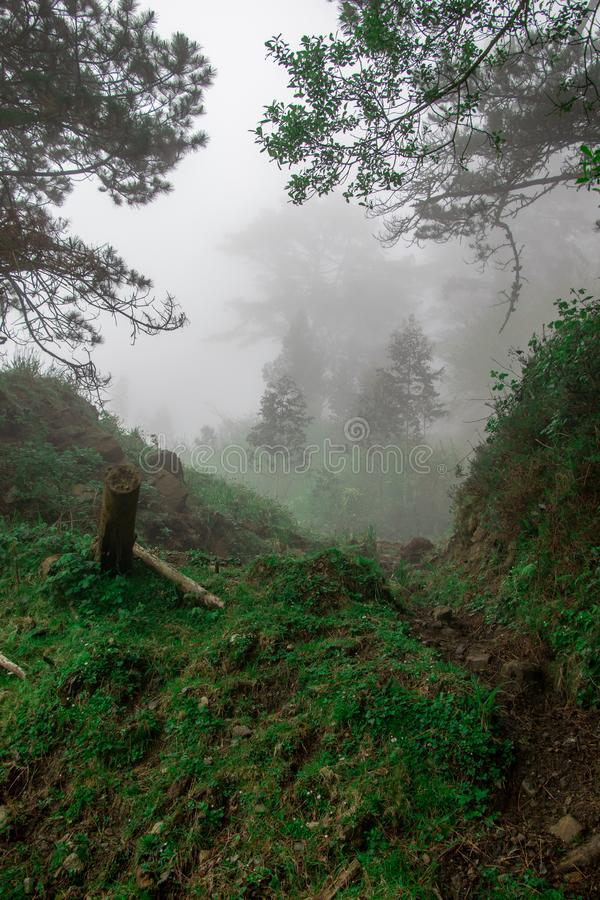 Άνεμος πορεία μέσω του δασικού συνόλου της βλάστησης και των βαλανιδιών μια ομιχλώδη ημέρα Τοπίο ενός Coruña, Γαλικία, Ισπανία στοκ φωτογραφίες με δικαίωμα ελεύθερης χρήσης