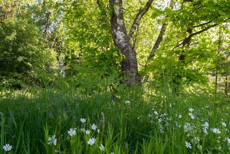 Άνετη απομονωμένη γωνία του θερινού δάσους στο φως του ήλιου πρωινού στοκ φωτογραφία