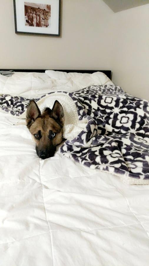 Άνετο σκυλί στοκ εικόνα
