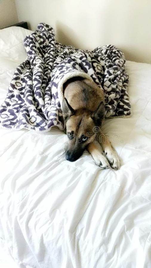 Άνετο σκυλί στοκ εικόνες