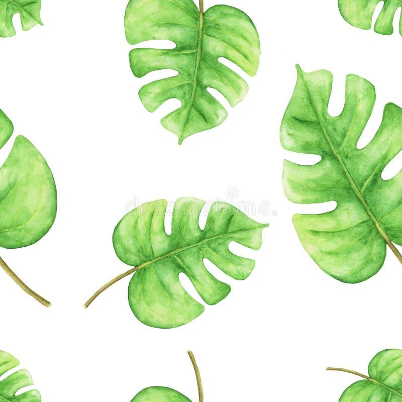 Άνευ ραφής απεικόνιση watercolor των τροπικών πράσινων φύλλων monstera στο λευκό διανυσματική απεικόνιση