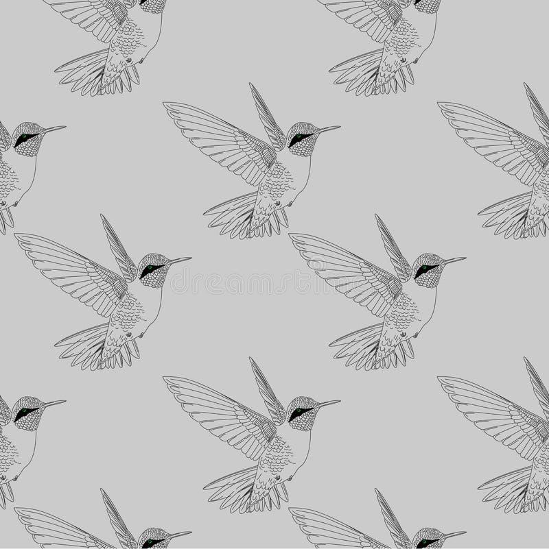 Άνευ ραφής βουίζοντας πουλί τα κολίβρια δίνουν το συρμένο εκλεκτής ποιότητας υπόβαθρο ύφους ελεύθερη απεικόνιση δικαιώματος