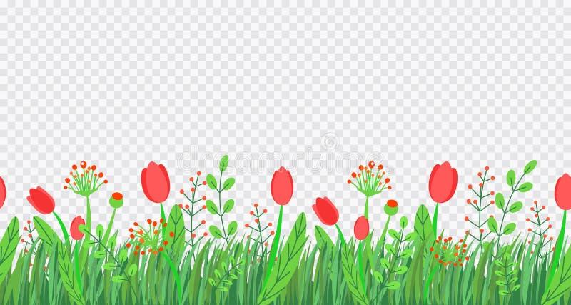 Άνευ ραφής διάνυσμα συνόρων χλόης άνοιξη με τα λουλούδια Floral στοιχείο εγκαταστάσεων φύσης άνοιξης wildflower που απομονώνεται  διανυσματική απεικόνιση