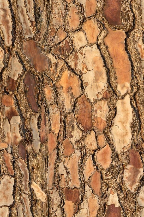 Άνευ ραφής ζωηρόχρωμο σχέδιο της σύστασης πεύκων φλοιών για την τυπωμένη ύλη και wale του υφάσματος στοκ φωτογραφίες με δικαίωμα ελεύθερης χρήσης